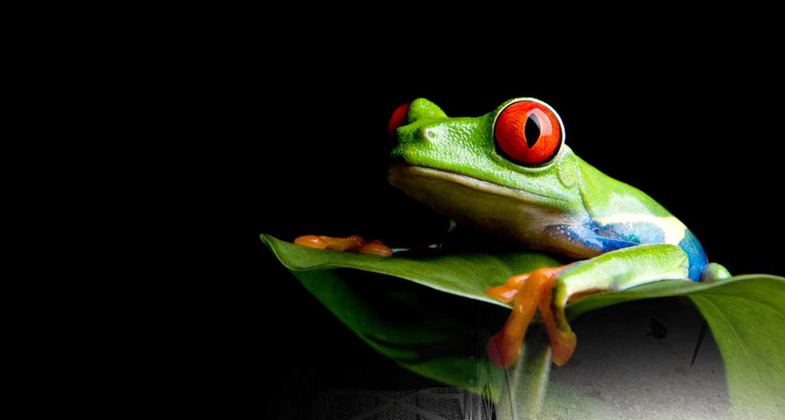Eat That Frog! - Web Designers Torquay Devon
